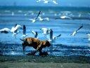 BirdBuffer