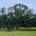Mark C. Pachucki